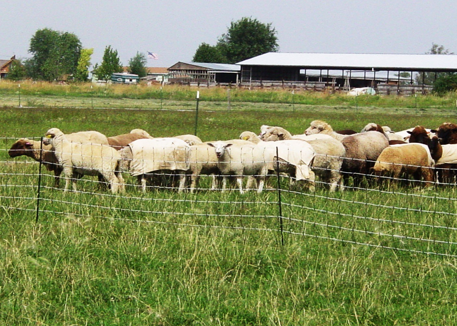 Sheep Netting Posts Included Powerfields High